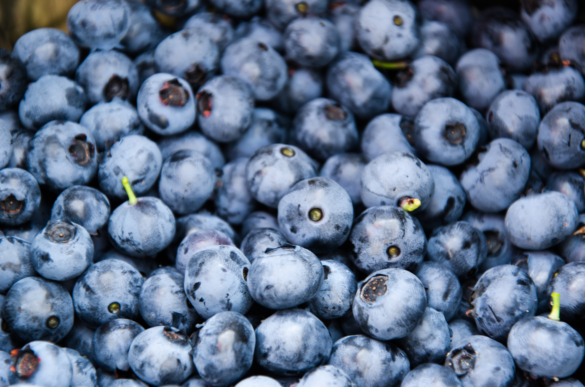 Reward for work - Blueberries, by: @rsseattle, source: flickr